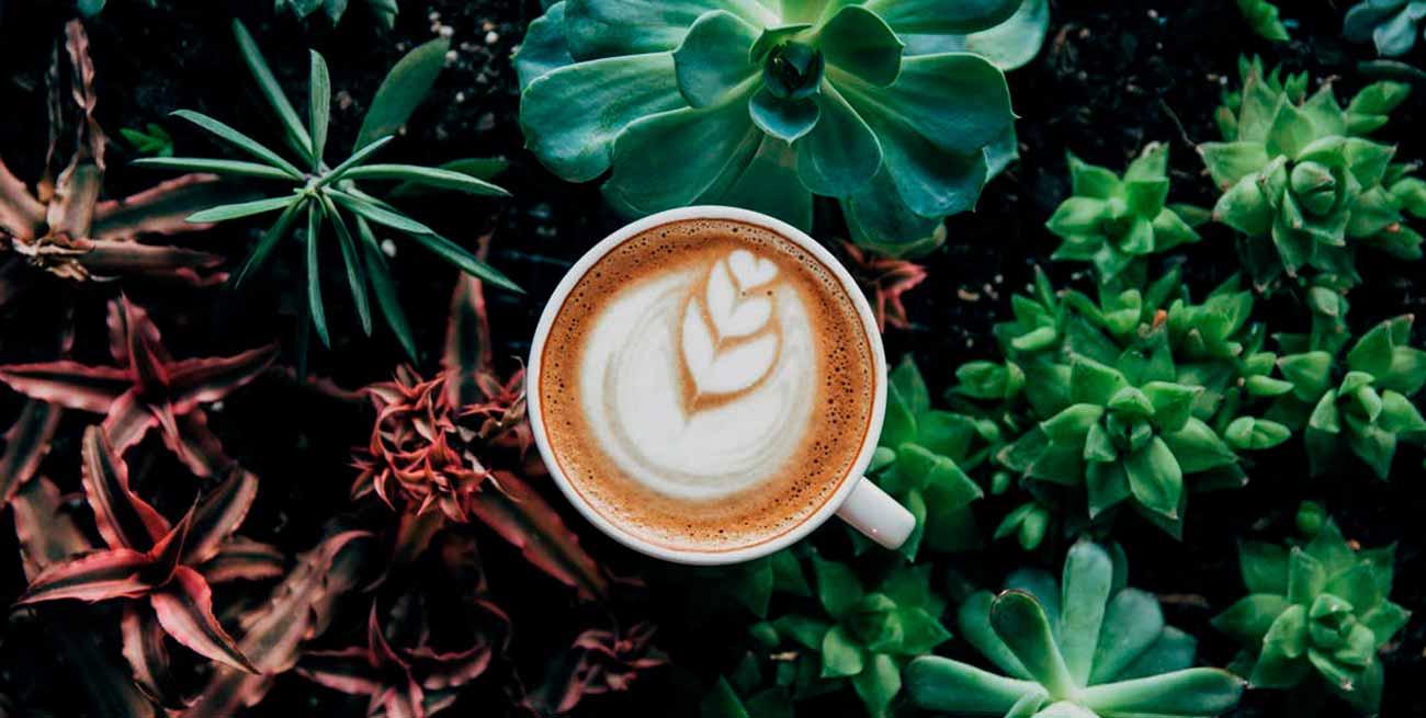 Las mejores frases y citas sobre el café