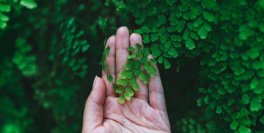 Diferencia entre biodegradable y compostable